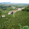 Valdobbiadene's Prosecco vinyards: a great view. To tase Prosecco book our Tour!
